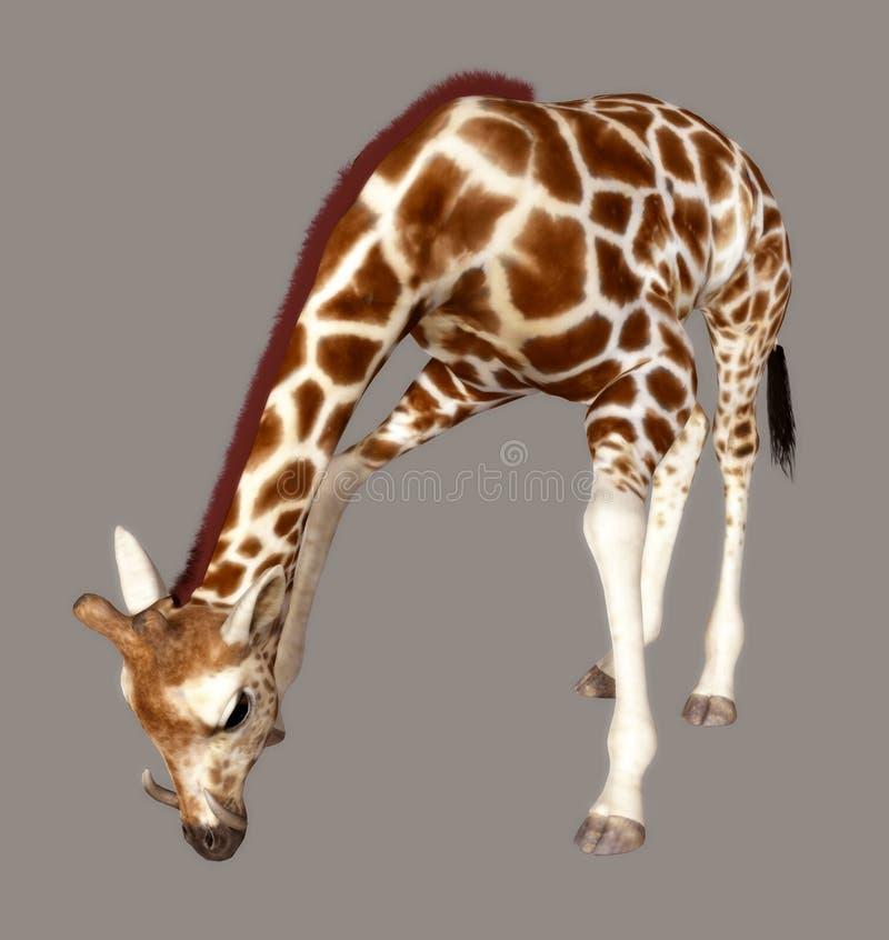 Free Giraffe Royalty Free Stock Photo - 5884375