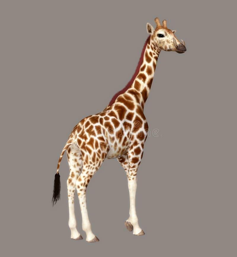 Download Giraffe stock illustration. Illustration of jungle, mammals - 5884380