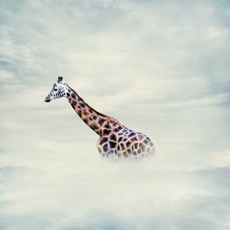 Giraffe above the clouds stock photo