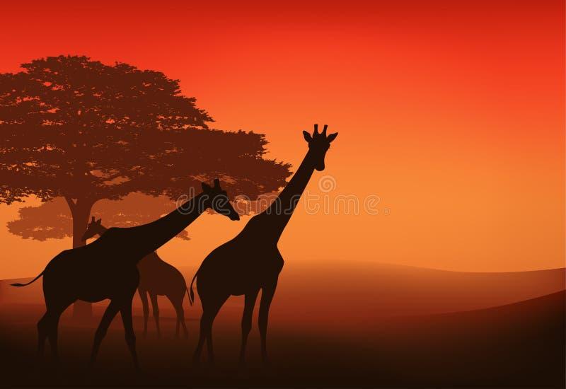 Giraffe africane illustrazione vettoriale