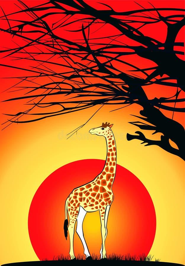 Giraffe au coucher du soleil illustration stock