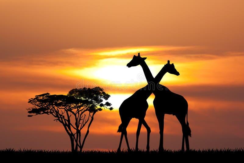 Giraffe au coucher du soleil illustration de vecteur