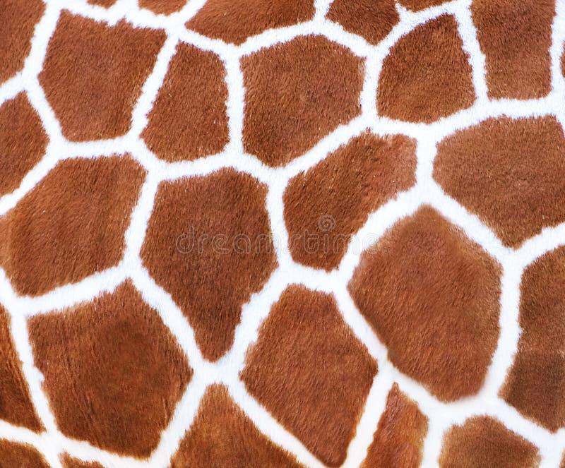 Giraffe beschmutzt Pelz-Beschaffenheit stockfoto