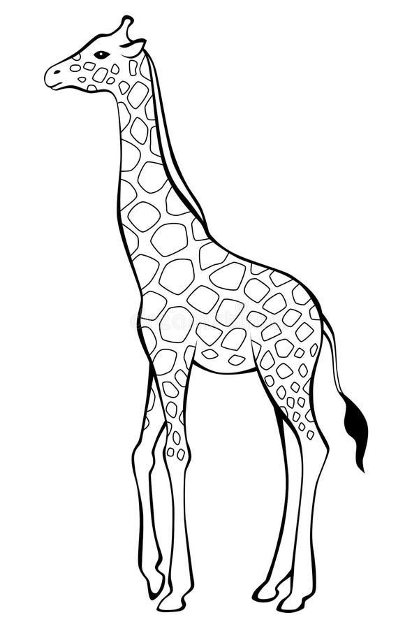 Giraffe Black Stock Illustrations 8 957 Giraffe Black Stock Illustrations Vectors Clipart Dreamstime