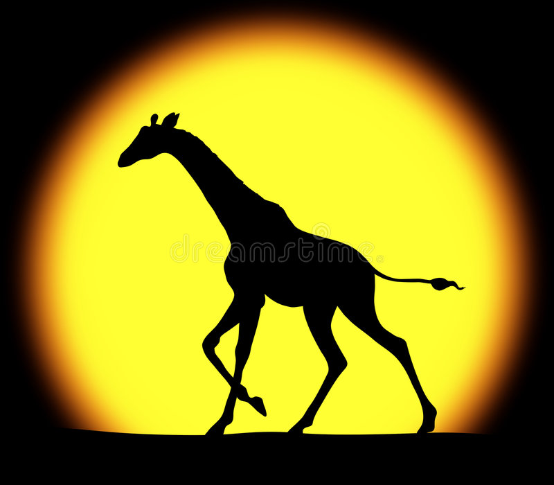 Giraffe in a bright sunset royalty free stock photography