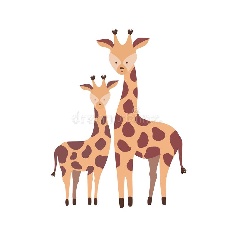 Giraffe with calf isolated on white background. Family of cute wild African savannah herbivorous animals. Parent with royalty free illustration