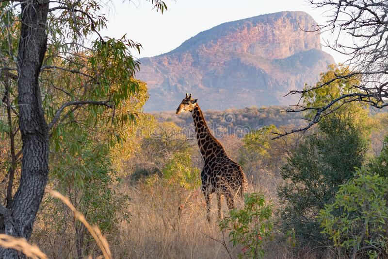 Mount Meru of Arusha National Park in the distance, taken