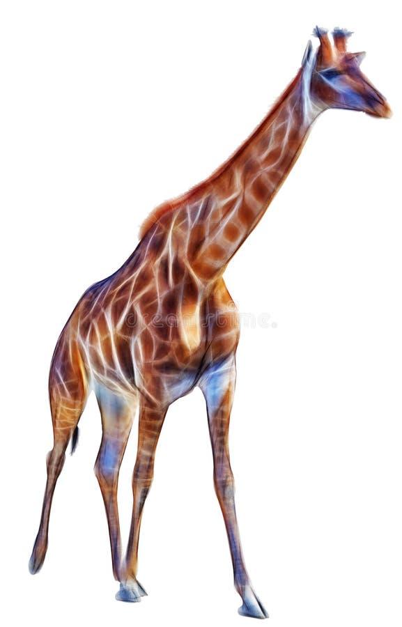 Giraffe d'isolement sur le fond blanc illustration libre de droits