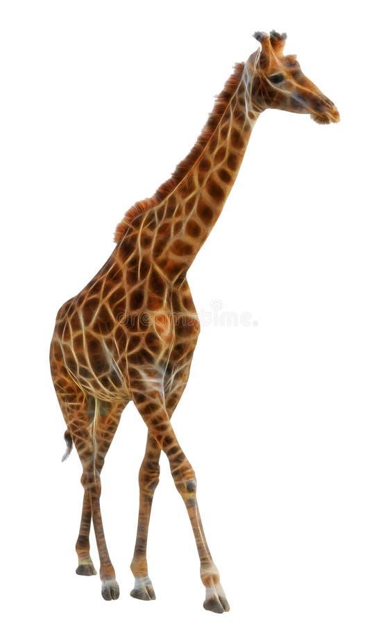 Giraffe d'isolement sur le fond blanc illustration stock