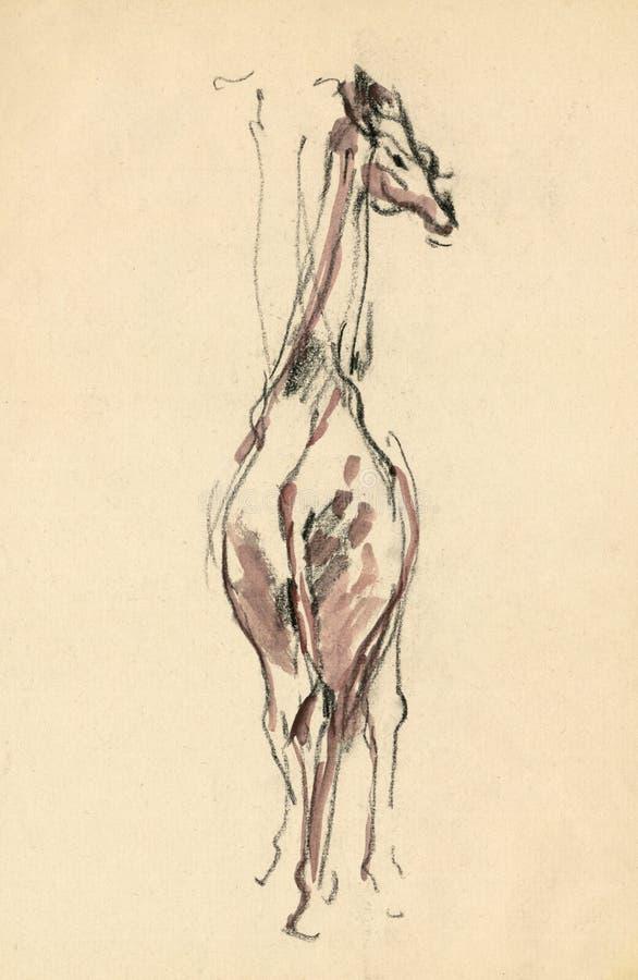 Giraffe, Drawing 4 Stock Photography
