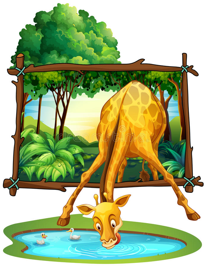 Free Giraffe Drinking Water In The Jungle Stock Photography - 65815552