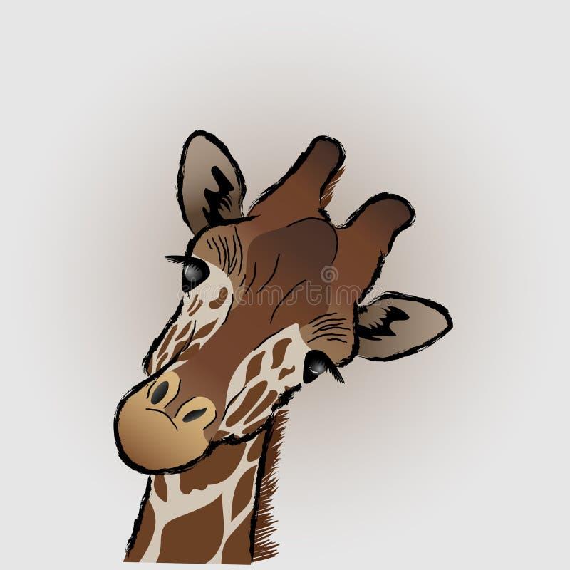Giraffe face close up stock image