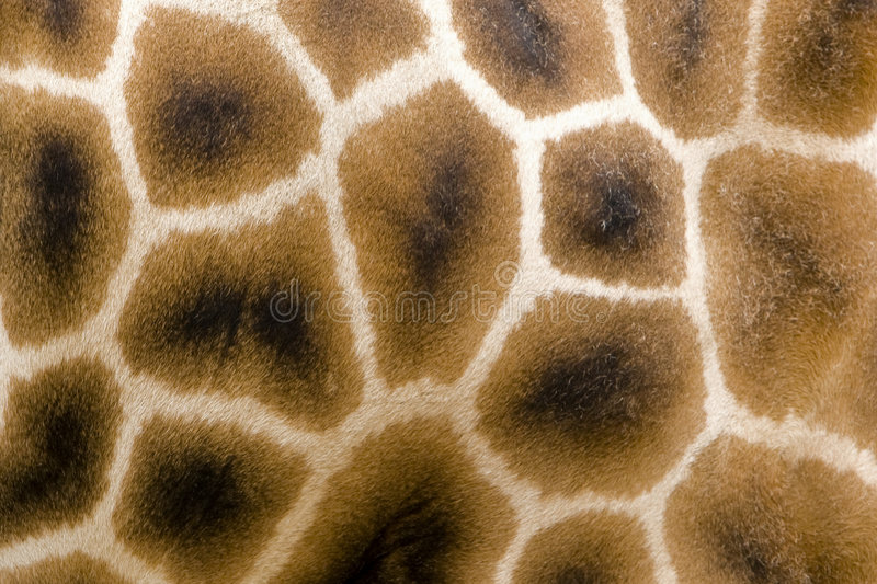 Giraffe fur. Geometric pattern of giraffe fur royalty free stock photography