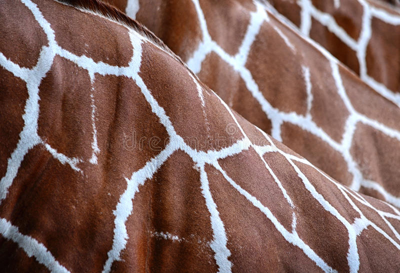 Giraffe skin pattern. Repeating pattern of giraffe skin fur royalty free stock photography