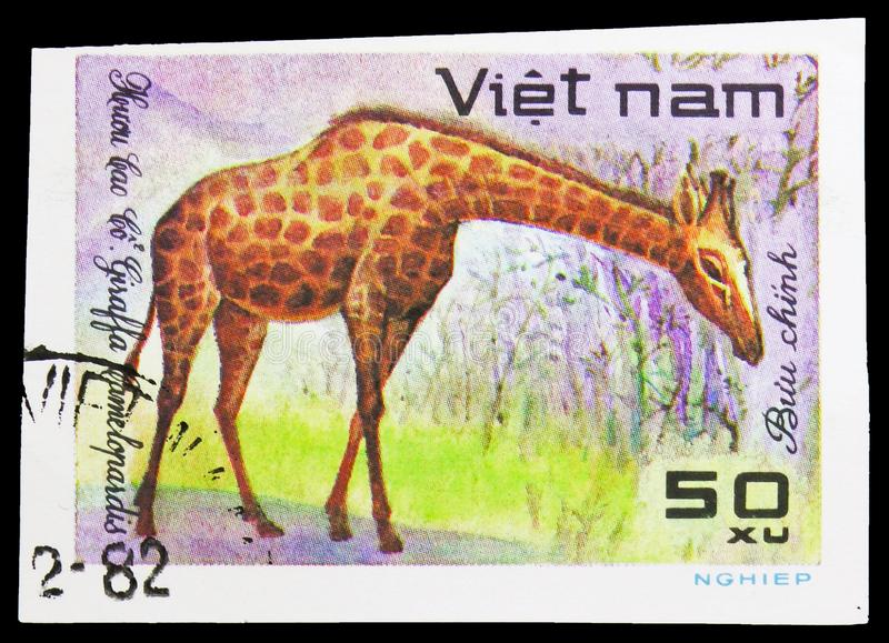 Giraffe (Giraffa camelopardalis), World wild animals serie, circa 1981. MOSCOW, RUSSIA - SEPTEMBER 26, 2018: A stamp printed in Vietnam shows Giraffe (Giraffa stock photo