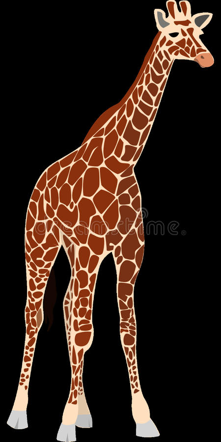 Giraffe, Giraffidae, Terrestrial Animal, Mammal royalty free stock photos