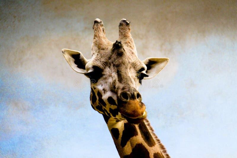Giraffe-Haltungs-Portrait stockfotografie