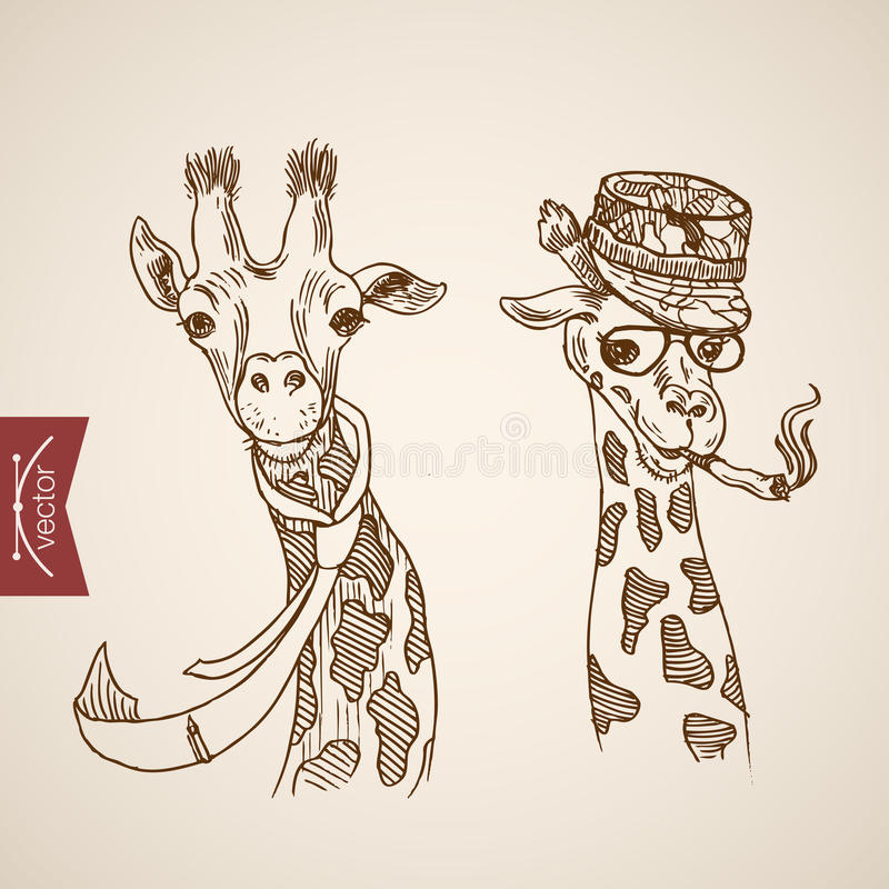 Giraffe head hipster style engraving lineart vintage vector. Giraffe head hipster style human like clothes accessory wearing glasses scarf hat smoking cigarette vector illustration