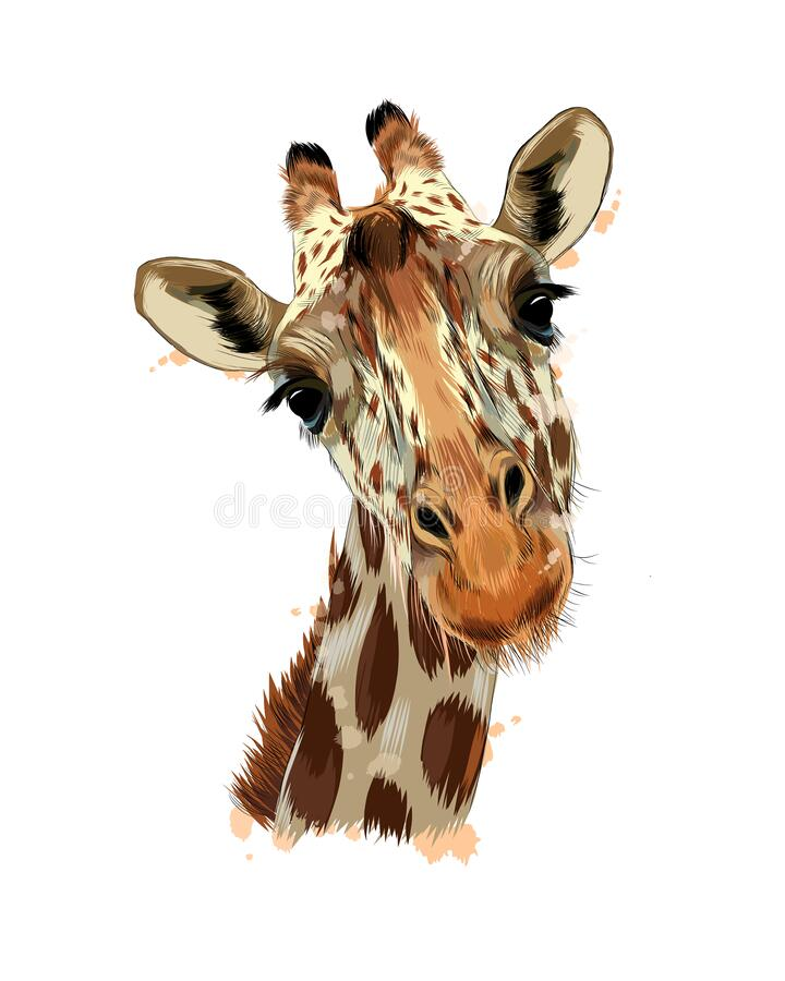 Free Giraffe Head Portrait From A Splash Of Watercolor, Colored Drawing, Realistic Stock Photo - 216447080