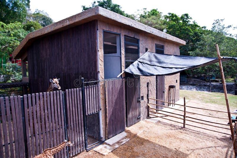 Giraffe house stock photo