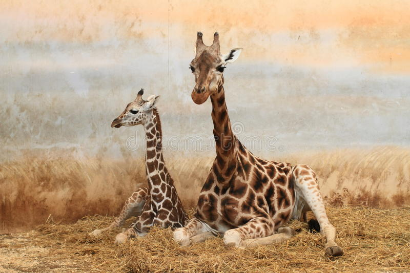 Giraffe mit Welpe stockfotos