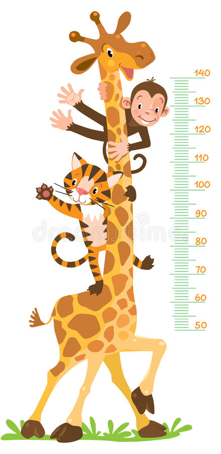 Giraffe, monkey, tiger. Meter wall or height chart. Cheerful funny giraffe, tiger and monkey. Height chart or meter wall or wall sticker. Childrens vector royalty free illustration