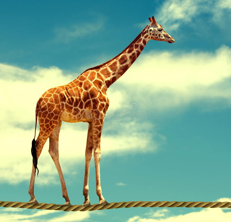 Free Giraffe On Rope Stock Photography - 67740452
