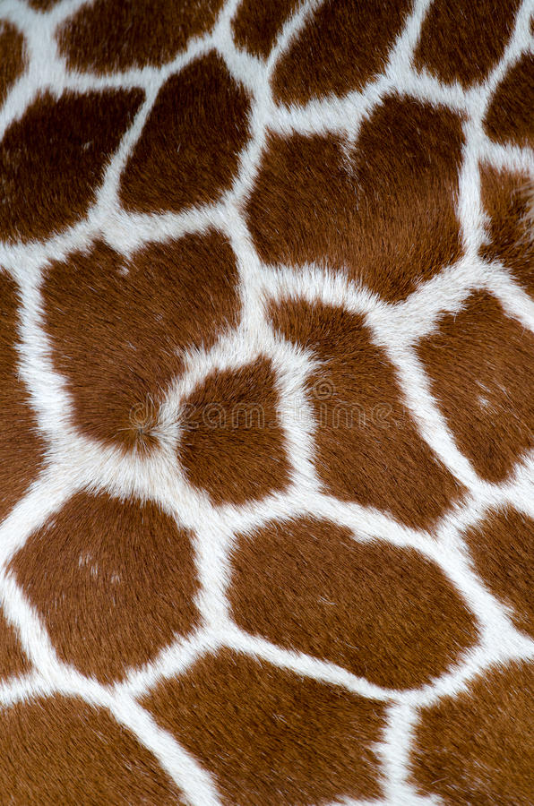 Giraffe skin pattern stock images