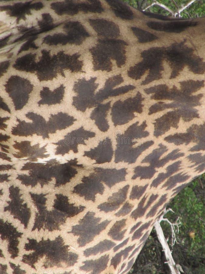 Giraffe pattern stock photos