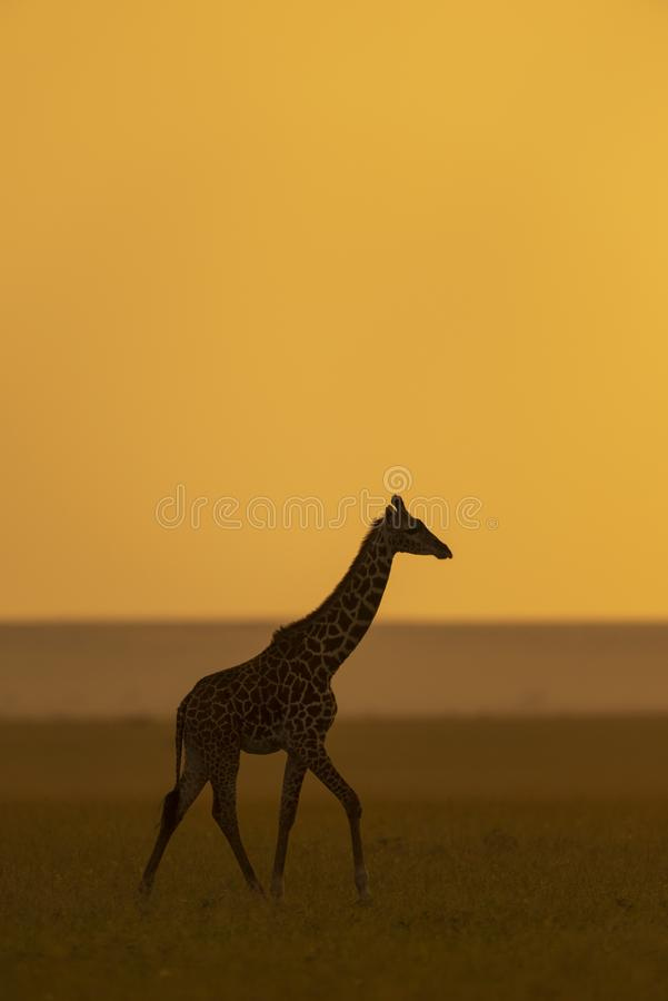 Giraffe silhoutte bei Sonnenuntergang am Masai Mara Game Reserve, Kenia stockfotografie