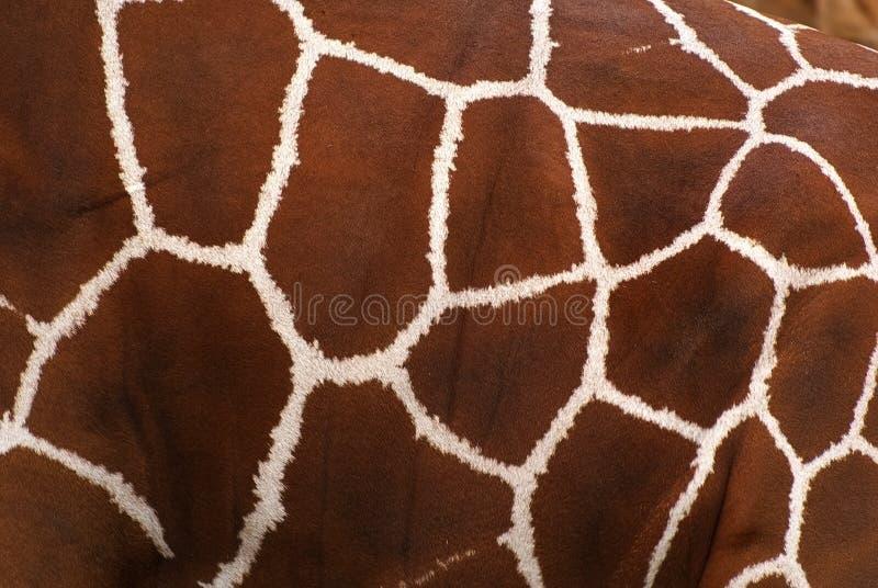 Giraffe skin royalty free stock photos