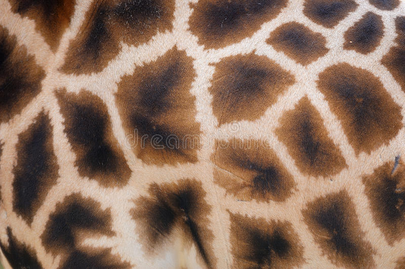 Giraffe skin with pattern stock photos