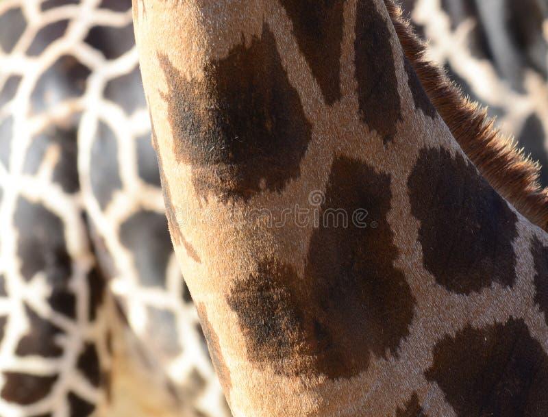 Giraffe skin texture vector illustration