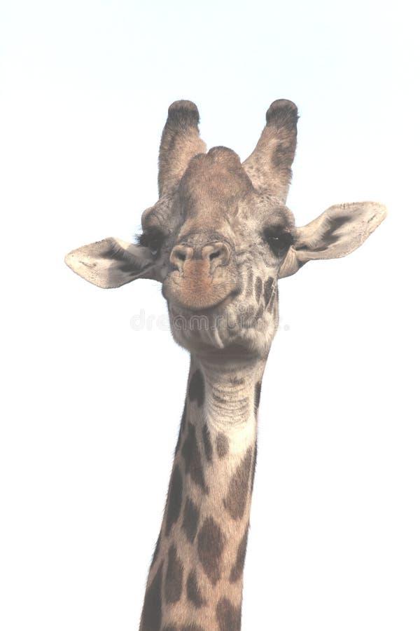 Giraffe Smiling royalty free stock photography