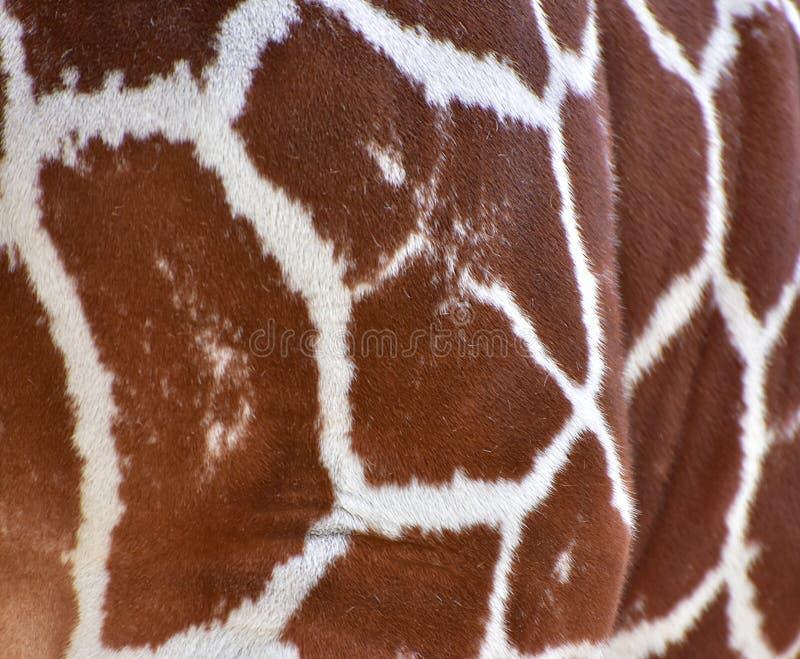 Giraffe spots stock image