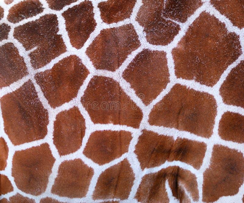 Giraffe Texture stock image