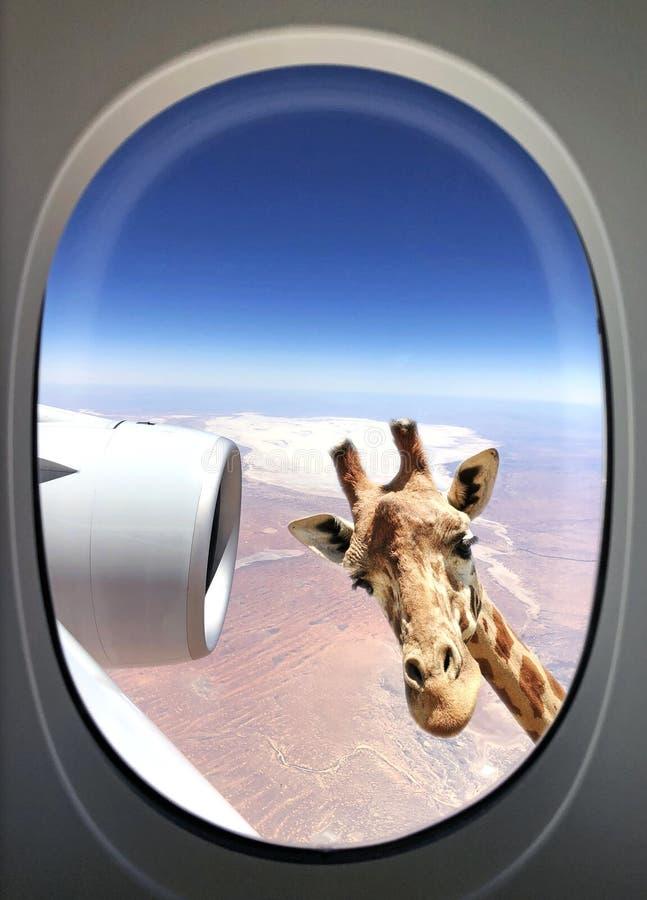 Giraffe view stock photos