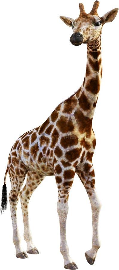 Giraffe, wild lebende Tiere, Natur, Afrika, lokalisiert, Tier stockfotos