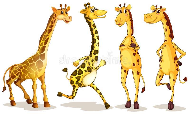 giraffen vector illustratie