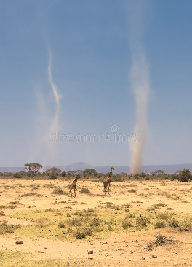 Giraffes και αμμοθύελλες στο amboseli, Κένυα στοκ φωτογραφίες με δικαίωμα ελεύθερης χρήσης