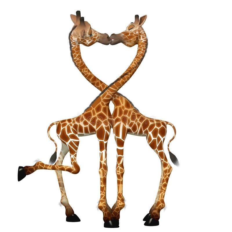 Giraffes Kissing. Giraffes in Love. Giraffes Kissing. Isolated on a white background stock illustration