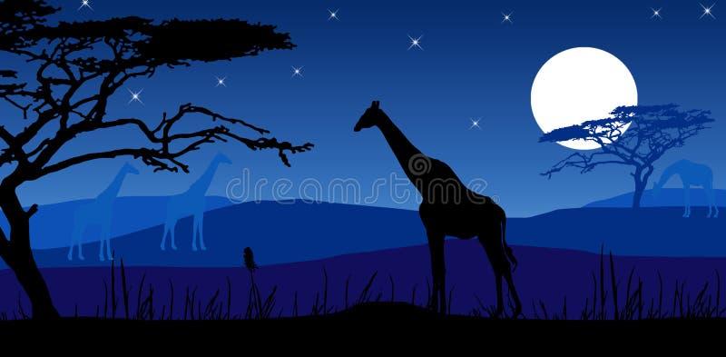 Giraffes In Moonlight Stock Image