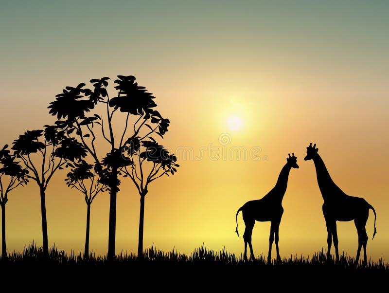 Giraffes no nascer do sol ilustração do vetor