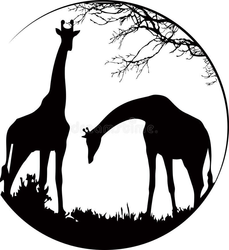 Giraffes scene. Giraffes eating branch in circle stock illustration