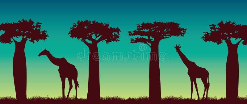 Giraffs, baobaby i nocne niebo, krajobraz afryki royalty ilustracja