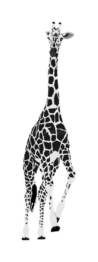Giraffvektorillustration som isoleras på vit bakgrund afrikanskt djur stock illustrationer