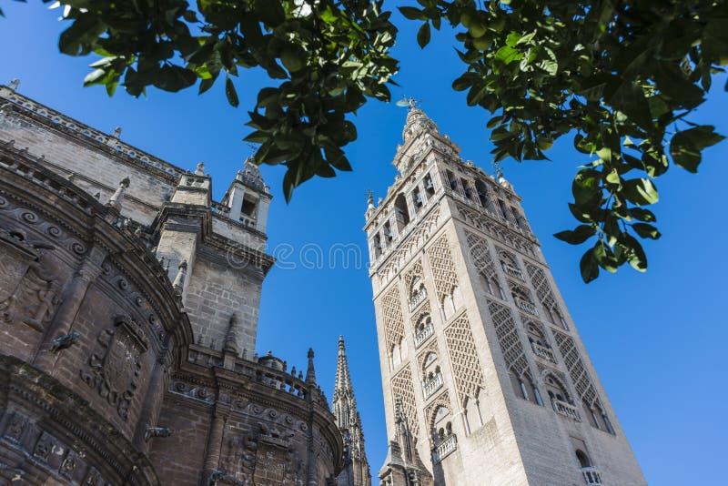 Giraldaen i Seville, Andalusia, Spanien fotografering för bildbyråer