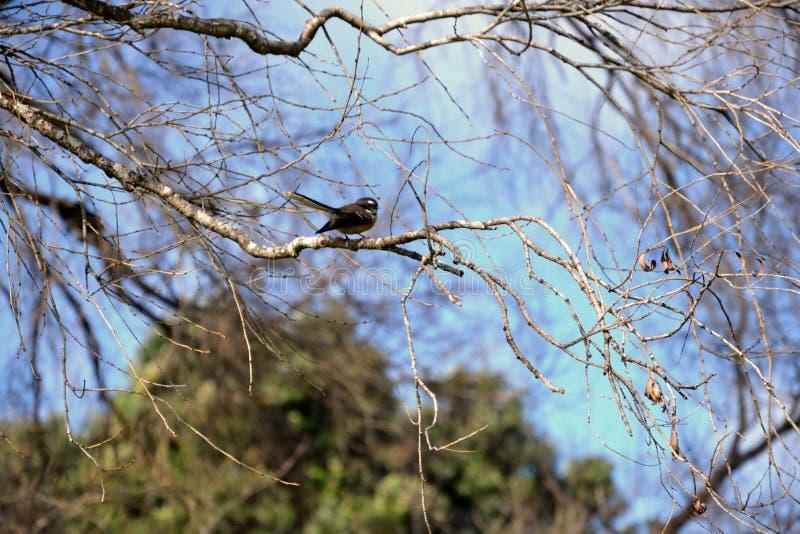 Girante laterale della Nuova Zelanda fotografie stock libere da diritti