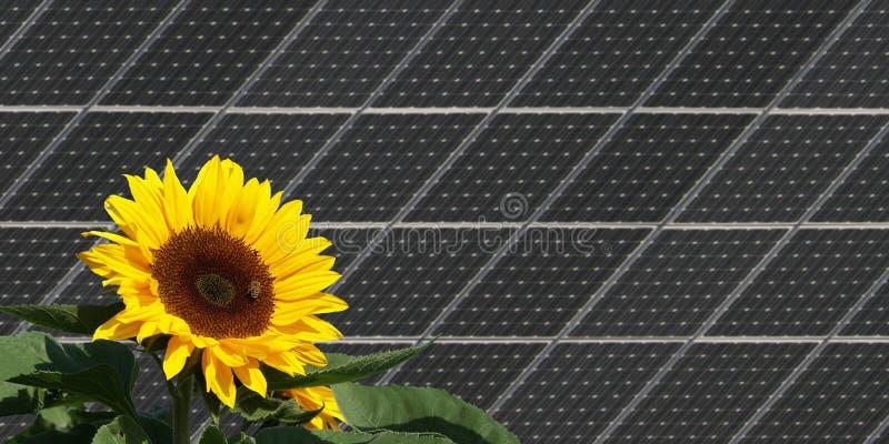 Girasol delante de los paneles solares imagen de archivo