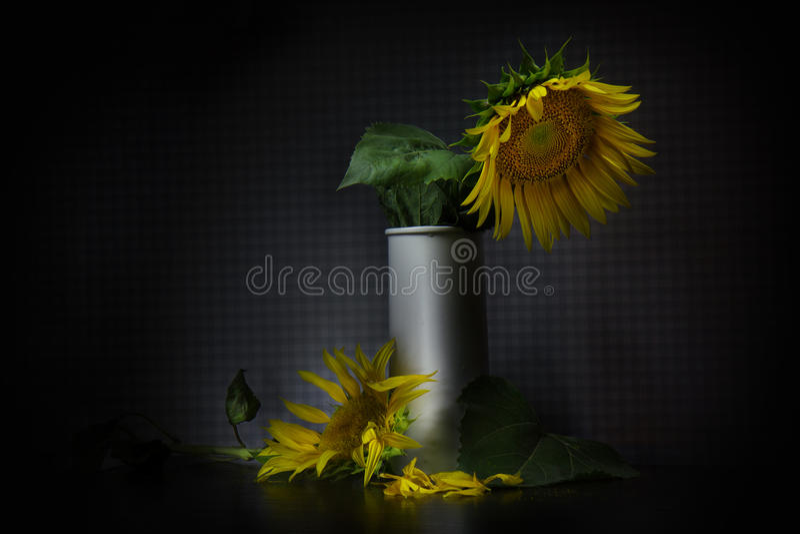 girasol en un florero imagenes de archivo